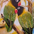 Black Faced Love Birds.  Chloe The Flying Lamb Productions  by Sigrid Tune
