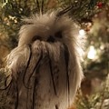 Black Feather Owl by Susan Brown