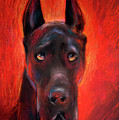 Black Great Dane Dog Painting by Svetlana Novikova