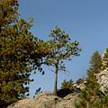 Black Hills Lone Tree by Mike Oistad