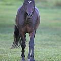 Black Horse by Glenn Vidal