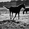 Black Horse. by   larisa Fedotova