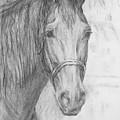 Black Horse by Tatiana Berezina