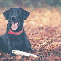 Black Labrador In The Fall Leaves by Eleanor Abramson