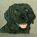Black Labrador Retriever by Terri Mills