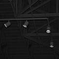 Black Lights by Rob Hans
