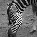Black N White Stripes by Sonja Anderson