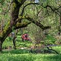 Black Oak And Creek by Jim Thompson