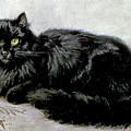 Black Persian Cat by Henriette Ronner