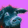 Black Pig Painting On Purple by Jan Matson