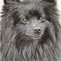 Black Pomeranian Painting by Kate Sumners