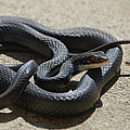 Black Racer by DigiArt Diaries by Vicky B Fuller