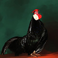 Black Rooster by Lisa Redfern