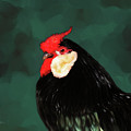 Black Rooster Number Two by Lisa Redfern