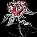 Black Rose by Brittni Bailie