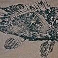 Black Sea Bass - Grouper - Rockfish by Jeffrey Canha