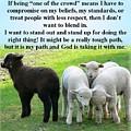 Black Sheep by Donna Cavanaugh