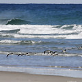 Black Skimmers In Ponce by Deborah Benoit