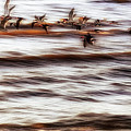 Black Skimmers Of Long Beach - Mississippi - Birds by Jason Politte