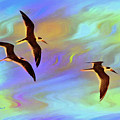Black Skimmers Three by Deborah Benoit