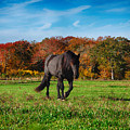 Black Stalion In The Fall Colors by Jeff Folger