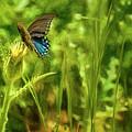 Black Swallowtail No. 2 Painterly by Belinda Greb