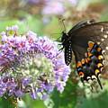 Black Swallowtail by Tammy Finnegan