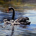 Black Swan And Cygnets No 1 by Ryn Shell