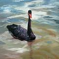 Black Swan by Roseann Gilmore