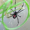 Black Widow Wheel by Al Powell Photography USA