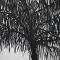 Black Willow by Sally Van Driest