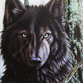 Black Wolf by Sandi Baker