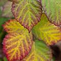 Blackberry Autumn by Denise Dethlefsen
