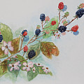 Blackberry Composition by Geraldine Leahy