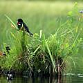 Blackbird Island by Tony Beaver