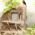 Blackbird by Margaret Goodwin