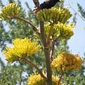 Blackbird Singing by Jeanette Oberholtzer