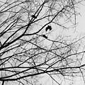 Blackened Birds by Savanah Schafer