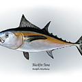 Blackfin Tuna by Ralph Martens
