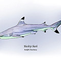 Blacktip Shark by Ralph Martens