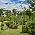 Blackwater Swamp by Erika Fawcett
