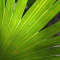 Blades Of Green by Tammy Mutka