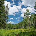 Blaine Basin Trail Through An Aspen Grove by Cascade Colors