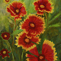 Blanket Flowers by Barbara Wolf