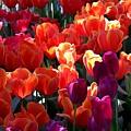 Blankets Of Tulips by Jeelan Clark