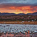 Blast Off At Bosque Del Apache, New Mexico  by Sam Antonio Photography