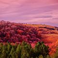 Blazing Autumn by Goran  Vucicevic