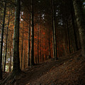 Blazing Forest by Angel Ciesniarska