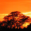 Blazing Oak Tree by Karen Wiles