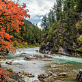 Blazing Red Mountain Maple, Greys River by Daryl L Hunter